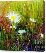 Springing Daisy's Canvas Print