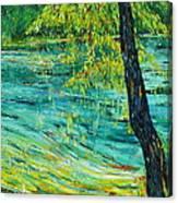 Tree At Ichetucknee Canvas Print