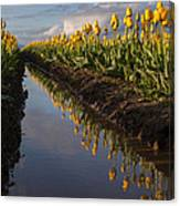 Springs Beautiful Reflection Canvas Print