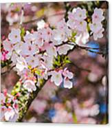 Spring's First Blush Canvas Print