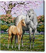 Spring's Gift - Mare And Foal Canvas Print