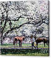 Springtime At Keeneland Canvas Print