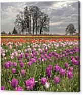 Springtime At Tulip Farm Canvas Print