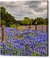 Springtime Beauty Canvas Print