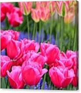 Springtime Blooms In Holland Canvas Print
