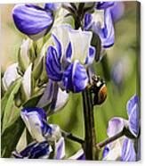Springtime Bluebonnet Canvas Print