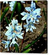 Springtime Blues Canvas Print