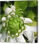 Springtime Bud Canvas Print