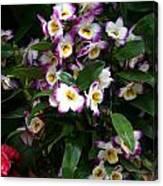 Springtime Flowers At Biltmore Estate Canvas Print