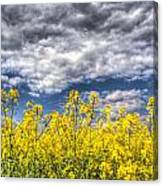 Springtime In England Canvas Print