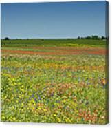 Springtime In Texas 2 Canvas Print