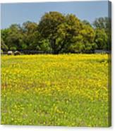 Springtime In Texas 3 Canvas Print