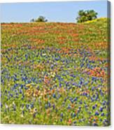 Springtime In Texas 5 Canvas Print