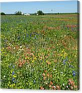 Springtime In Texas 6 Canvas Print