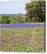 Springtime In Texas Canvas Print