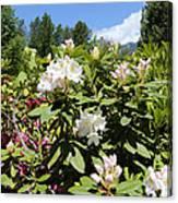 Springtime In The Cascades Canvas Print