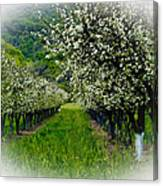 Springtime In The Orchard Canvas Print