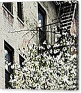 Springtime In Washington Heights Canvas Print