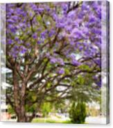 Springtime Jacaranda Tree Canvas Print