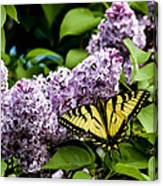Springtime Lilac And Butterfly Canvas Print