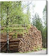 Springtime Logs Canvas Print