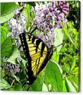 Springtime Moments- The Butterfly And The Lilac  Canvas Print