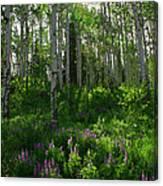 Springtime On The Grand Mesa Canvas Print