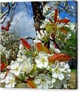 Springtime Pear Blossoms - Hello Spring Canvas Print