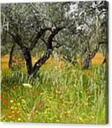Springtime Sicily Canvas Print
