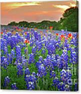 Springtime Sunset In Texas - Texas Bluebonnet Wildflowers Landscape Flowers Paintbrush Canvas Print