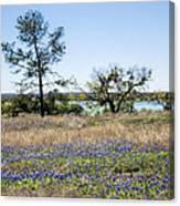 Springtime Texas Bluebonnets Naturalized Canvas Print