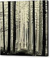 Spruce Magic Canvas Print