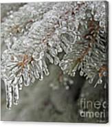 Spruce Under Glass Canvas Print
