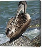 Sprucing Pelican Canvas Print