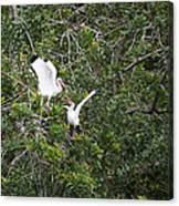 Squabbling Birds Canvas Print