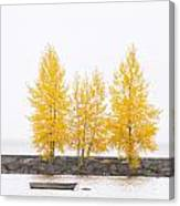 Square Diptych Tree 12-7693 Set 1 Of 2 Canvas Print
