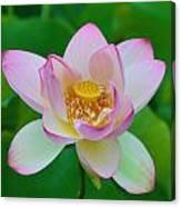 Square Lotus Flower Canvas Print