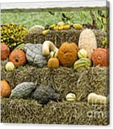 Squash Gourds And Pumpkins Canvas Print