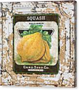 Squash On Vintage Tin Canvas Print