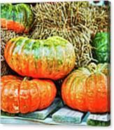 Squatty Orange Pumpkins Canvas Print