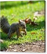 Squirrel 1 Canvas Print