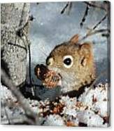 Squirrel 2 Canvas Print