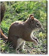 Squirrel And His Sunflower Seed Canvas Print