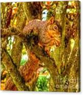 Squirrel Away Acorn Canvas Print