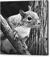 Squirrel Black And White Canvas Print