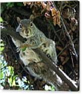 Squirrel By Nest Canvas Print