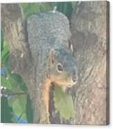 Squirrel Chillin Canvas Print