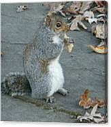 Squirrel Chomping On Bread Canvas Print