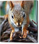 Squirrel Close-up Canvas Print