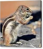Squirrel Con Queso Canvas Print
